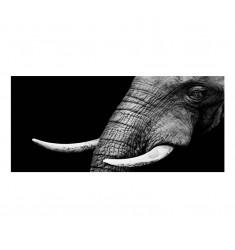 Cuadro alto brillo ANIMALES 84 -50x150cm.
