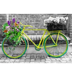 Cuadro Bicicleta Vintage Alto Brillo
