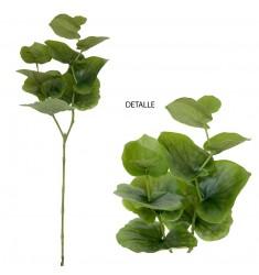 Eucalyptus verde