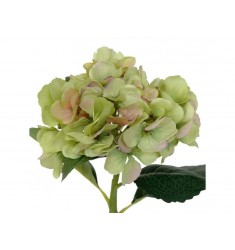 Hortensia 48cm. verde.