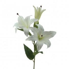 Lilium 70cm. blanca