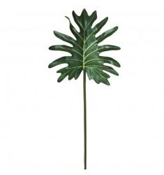 Philo selloum verde