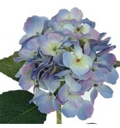 Hortensia 48cm. azul